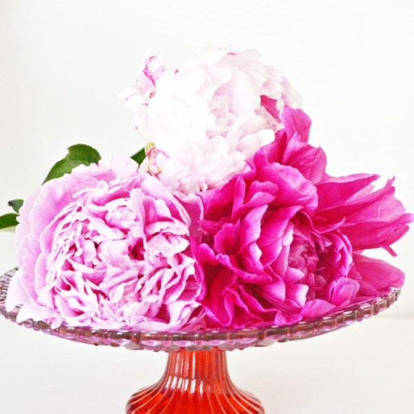 Simple Peony Centerpiece
