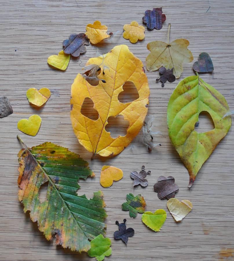 leaf-confetti-13