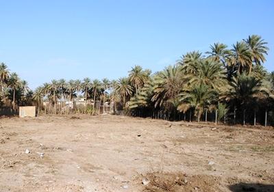 كربلاء :: مديرية الزراعة تدعو الحكومة المحلية باتخاذ اجرارات لوقف تفتيت الاراضي