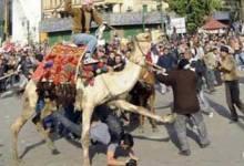 """صورة مصر: غضب من قرار تبرئة متهمي """"موقعة الجمل"""""""