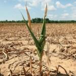 ضربة زراعية يتلقاها العراق بسبب ازمة المياه