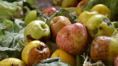 صورة ضبط 4 أطنان من التفاح الإيراني في الشلامجة معد للتهريب