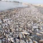 وزارة الزراعة تكشف عن اسباب نفوق الأسماك في العراق