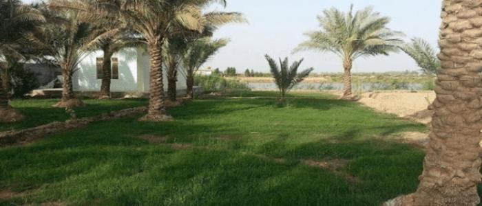 نائبة : هناك سرقات منظمة للأراضي الزراعية في بغداد، ويجب إيقاف العقود الزراعية