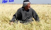 اطلاق المستحقات المالية للفلاحين والمزارعين