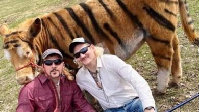 """صورة """"البقرة النمر"""" تحدٍ يجتاح الانترنت"""