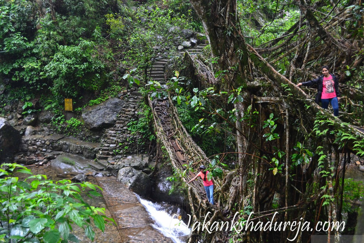 Living Root Bridges of Meghalaya