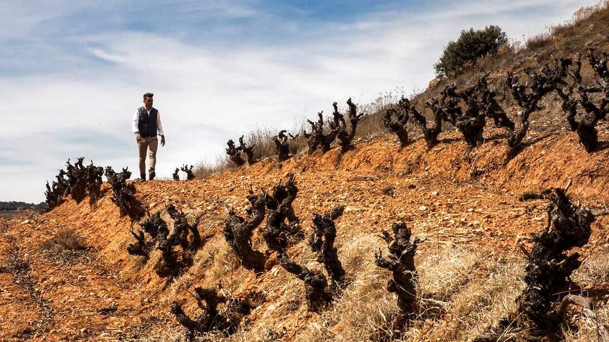 Milsetentayseis, una viticultura al límite que reinterpretará la Ribera del Duero | AkataVino Magazine