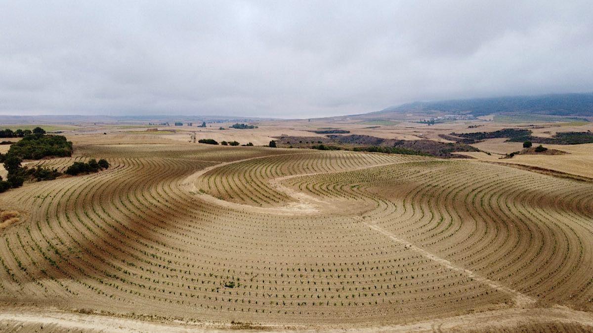 Bodegas RODA comienza en Cellorigo un proyecto enfocado a la viticultura regenerativa | AkataVino