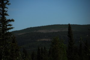 A large stand of defoliated aspen visible from across the valley.