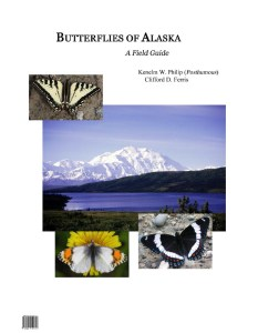 Cover of Butterflies of Alaska: A Field Guide