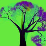 trees06-0846