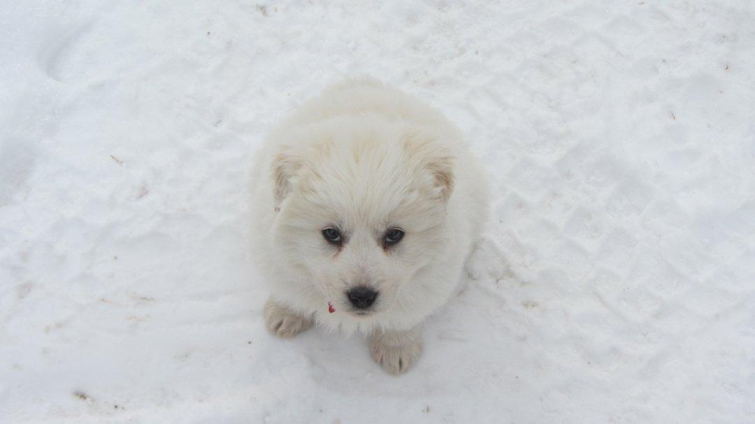 Rhea in the snow