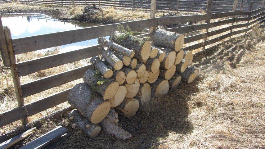 Fence 1 – Tree 0