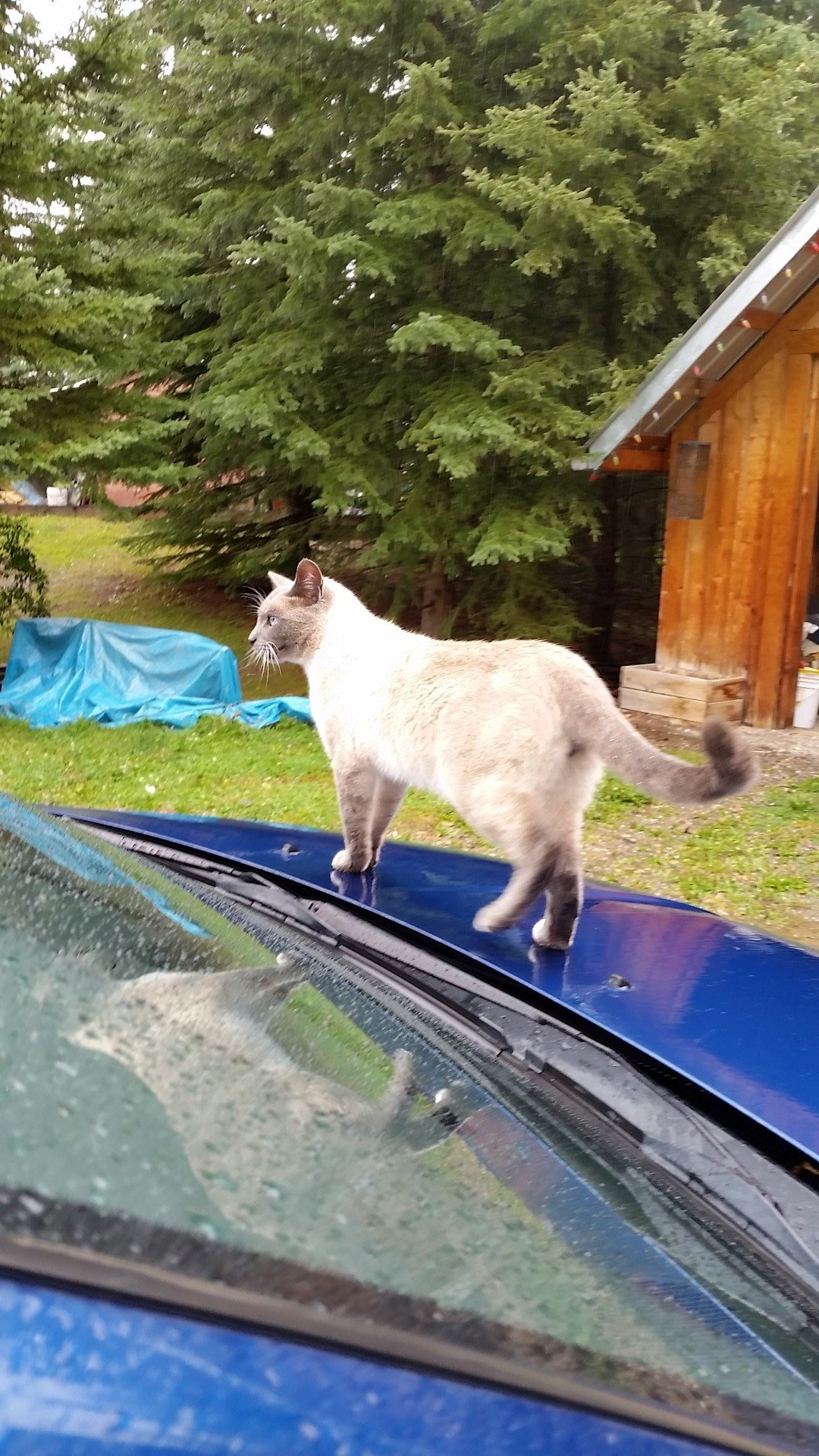 Stanley investigating the car