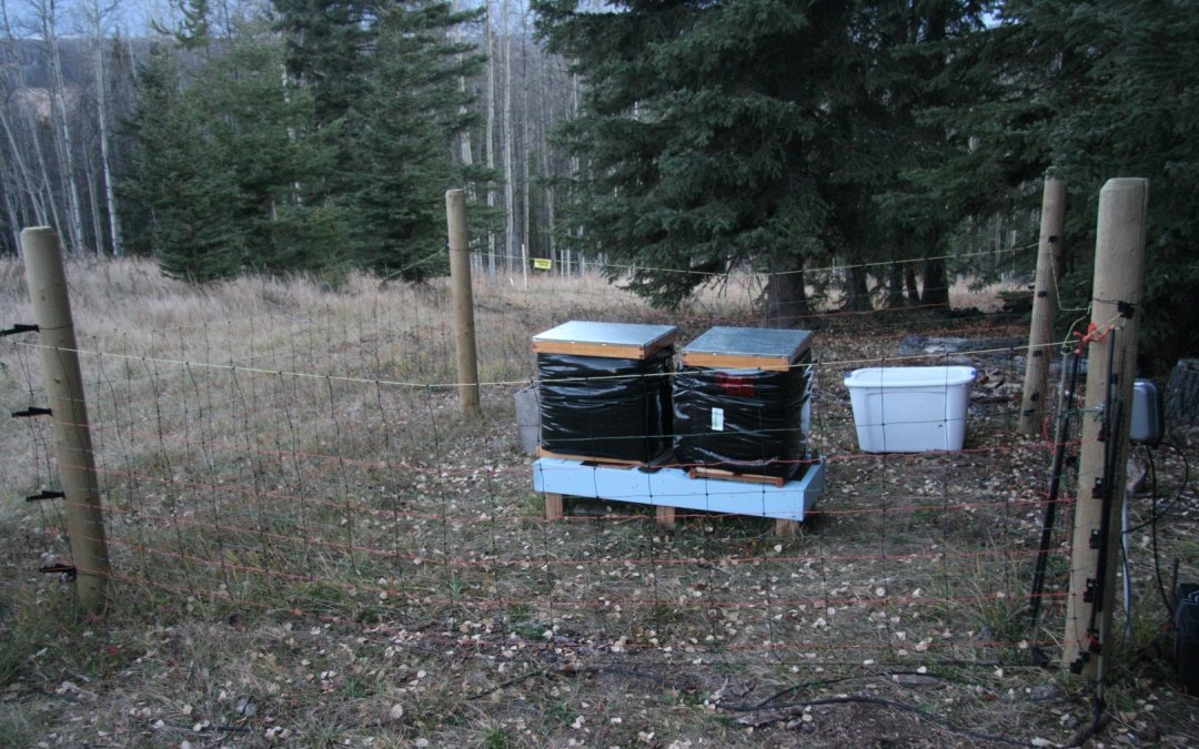 Bees – Ready for winter