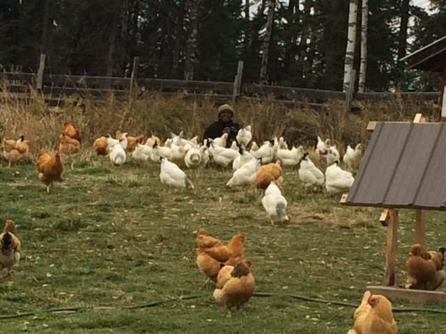 Chickens – Story Time