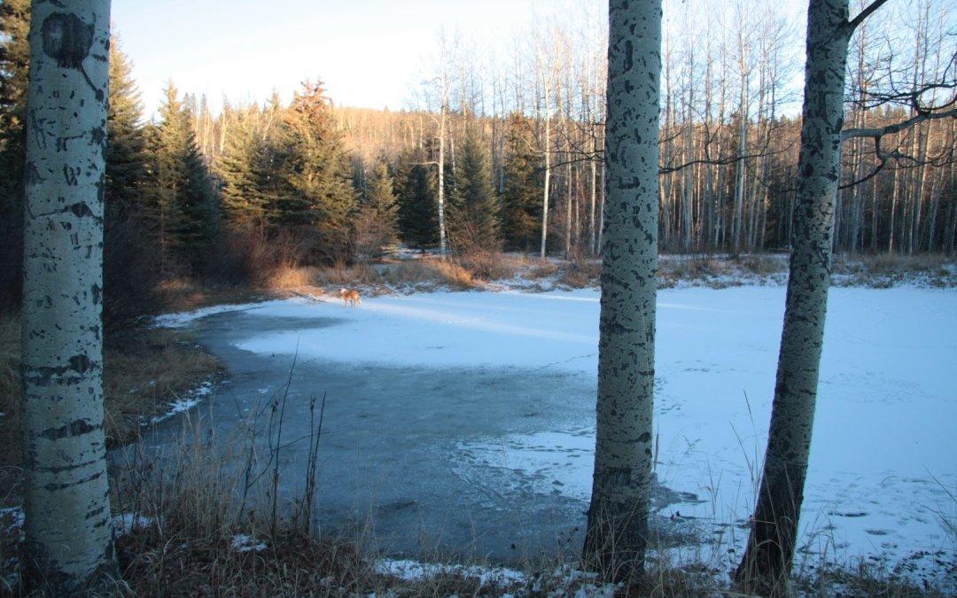 Frozen pond – New Playground