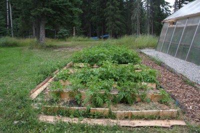 Root Vegetable Garden