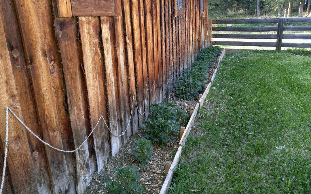 Barn garden bed
