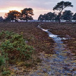 Cold Winter Sunset at Appleslade, New Forest
