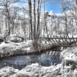 New Forest (Bolderwood) Infrared (1)