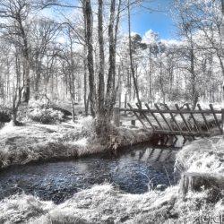 New Forest (Bolderwood) Infrared (1)