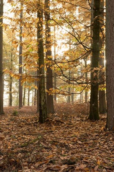 Anderwood Autumn 2 Original