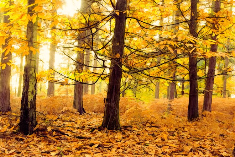 Anderwood Autumn 1 (Restyle : MaizedOwl & Glow (Multiplied and Screened) & Simplify