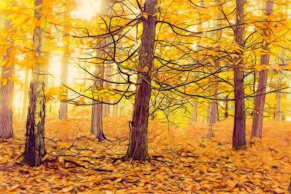 Anderwood Autumn 1 (Restyle : MaizedOwl & Glow)