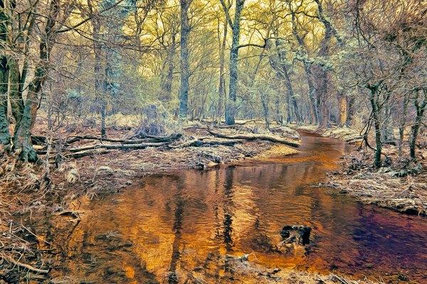 Rhinefield Winter Trees