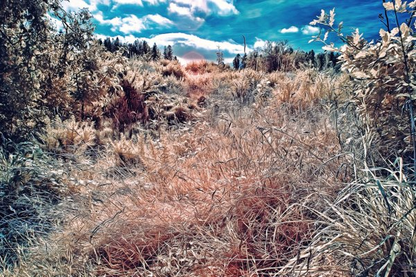 Summer Grasses - Painterly Style