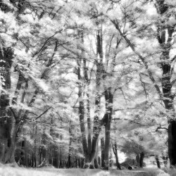 Autumn Black & White Light