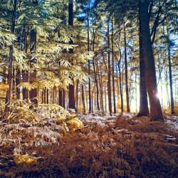 Sundown in the Forest