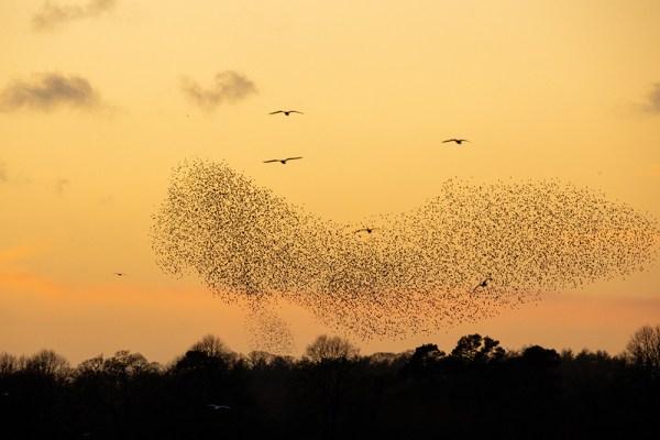 The Starling Slipper