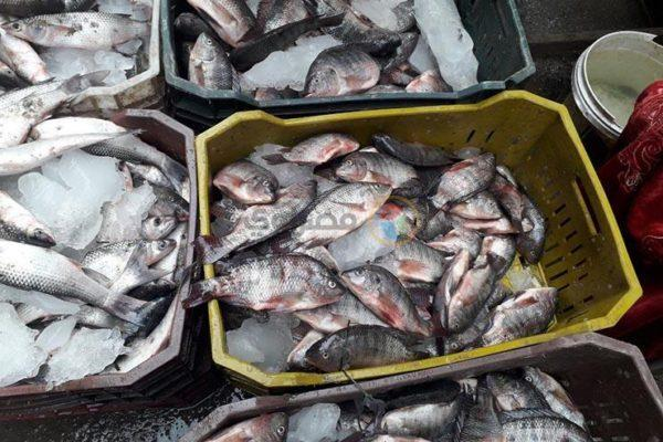 تراجع البلطي وزيادة في البوري.. أسعار السمك والمأكولات البحرية اليوم
