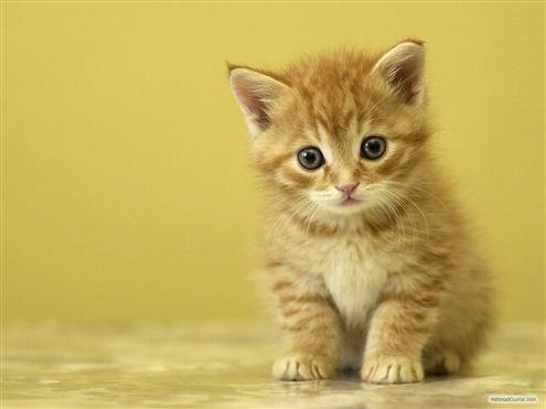 kucing guntar 147