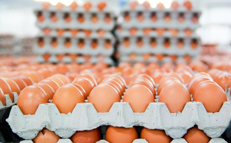 How To Start An Egg Supply Business In Nigeria
