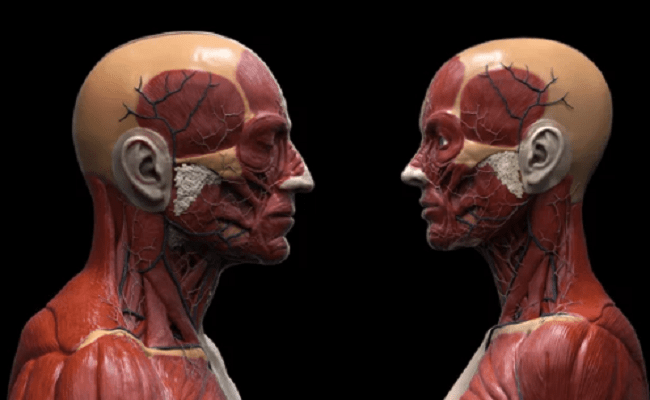 Types of Anatomy Classes for Medical Students