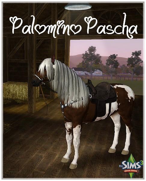 Palomino Pascha