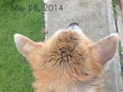 Ear - May 28, 2014