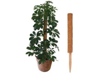 1.5m Coco Pole Plant Support - AK Kin Garden Supplies