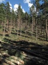 dımdızlak kalmış orman