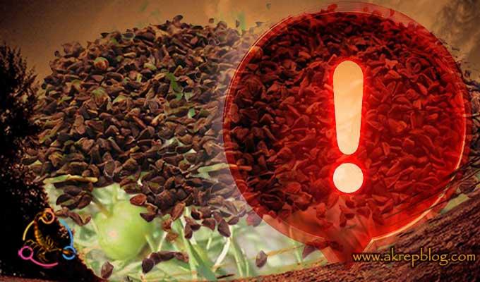 Üzerlik Tohumu Çiğneyerek Yutulur mu? Üzerlik Tohumu Yutmak Zararlı mı?