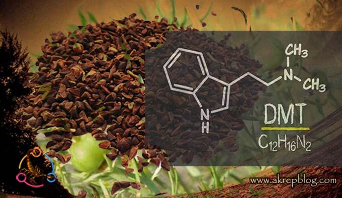 Üzerlik Tohumu DMT Oranını Yükseltir mi?
