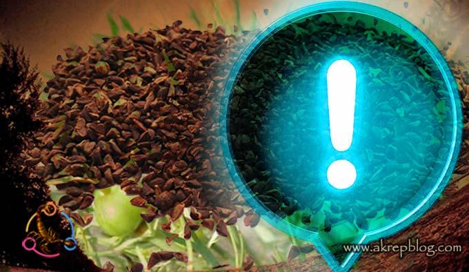 üzerlik tohumu etkileri, üzerlik tohumunun yan etkileri nelerdir?
