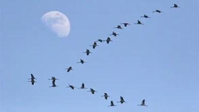 صورة باحثون : الاحتباس الحراري يسبب عودة مبكرة للطيور المهاجرة