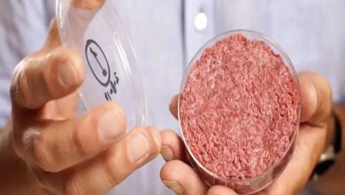 Photo of شريحة لحم مزروعة في مختبر قد تحدث قفزة عملاقة في قطاع الطعام ( فيديو )