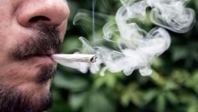 "Photo of شركة أميركية تبحث عن موظف لتدخين "" الحشيش "" مقابل آلاف الدولارات شهرياً !"
