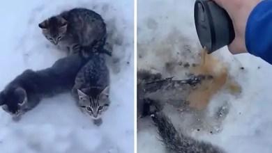 Photo of رجل ينقذ 3 قطط صغيرة من الموت بكوب قهوة ( فيديو )